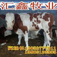 哪里卖小牛犊母牛