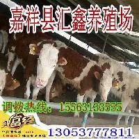 肉狗养殖小公牛