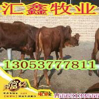 新疆维吾尔自治区鲁西黄牛肉牛犊哪里有