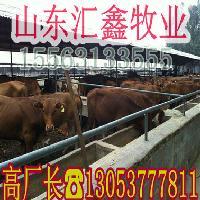 利姆赞牛架子牛哪里有卖多少钱
