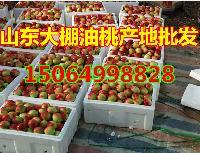 今年大棚油桃什么价格山东大棚油桃批发价格多少钱