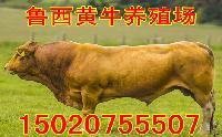 养100头牛投资多少钱