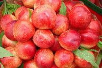 宏鸿集团食材配送百源食堂配送长沙农产品一站式采购服务--油桃