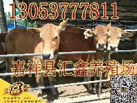 肉牛活牛价格6