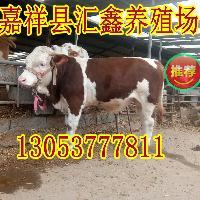 西門塔爾肉牛哪里好 牛犢養殖