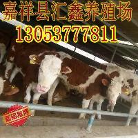 西门塔尔牛小牛犊东北西门塔尔小牛价格