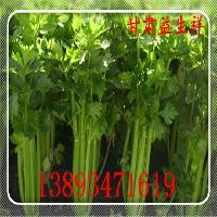 芹菜粉 提取物 供应 厂家直销 基地生产