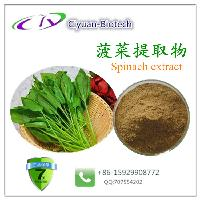 菠菜提取物10:1 Spinach extract