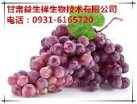 葡萄籽提取物   基地种植   量大从优  欢迎采购