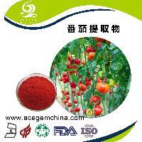 专业番茄提取物生产商--西红柿提取物 番茄粉