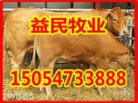 小牛犊价格