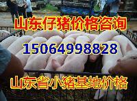 山东猪价今日山东仔猪销售价格,养猪场10公斤小猪价格