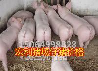 猪价已经逼近成本,山东仔猪*价格