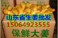 山东大姜价格,山东生姜产地,沂水县生姜合作社