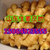 山东生姜价格行情,生姜*批发市场,大姜产地生姜种植