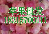 预测总结2017年山东红富士苹果价格红富士苹果批发价格表详细