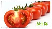 番茄粉  番茄速溶粉   果汁粉  固体饮料原料