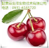 兰州针叶樱桃提取物   种植基地    量大从优   欢迎采购