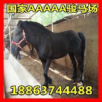 新疆马多少钱一匹