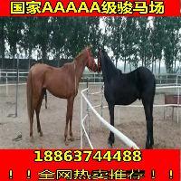 一匹好马要多少钱