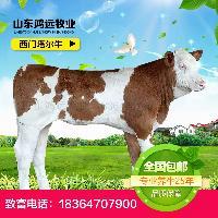 利木赞肉牛犊价格