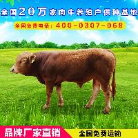 湖北襄樊种牛场
