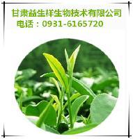 儿茶素    绿茶提取物    产品优质
