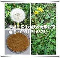 蒲公英酵素   药食兼用的植物    包邮