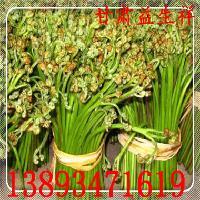 蕨菜粉 浓缩粉 厂家包邮 专业提取 基地生产