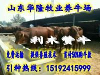 肉牛牛犊价格、