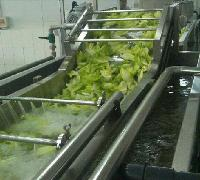 海产品清洗机,龙虾超声波清洗机,鱿鱼清洗机