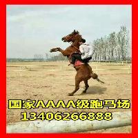 南昌出售骑乘马