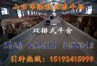 双城肉牛犊价格