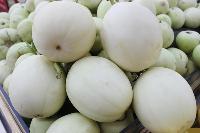 白皮甜香瓜