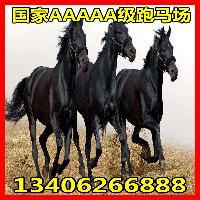 小马多少钱一匹便宜
