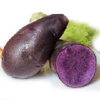 优质黑土豆  天然健康黑色食品   薯童品牌