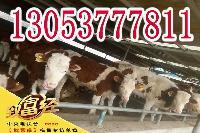 2017年*牛犊价格利木赞牛