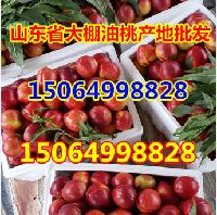 黄油桃产地山东油桃产地价格多少