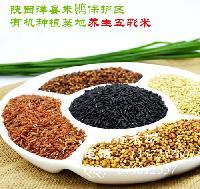 纯天然五彩米500g洋县纯天然养生五彩米产地厂家直销