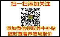 贵州省肉牛价格政策