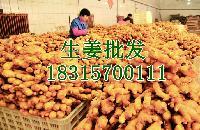 今日小黄姜价格 小黄姜批发价格查询详细