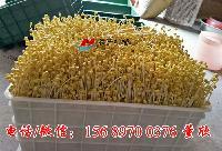 联浩全自动商用豆芽机有多大型号的,多少钱