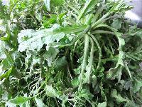 野生荠荠菜粉价格 荠荠菜提取物 浓缩浸膏粉厂家供应