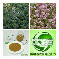 浩宇农业供应地椒草粉百里香粉宁夏地椒茶百里香茶