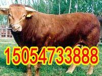 贵州省养牛基地在哪里