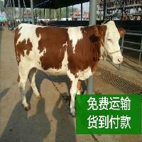 湛江哪里有养牛场