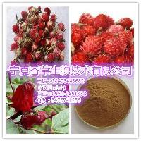 红巧梅粉价格 红巧梅花提取物、妃子红速溶茶