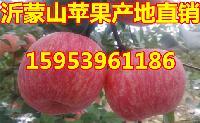 紅富士蘋果價格