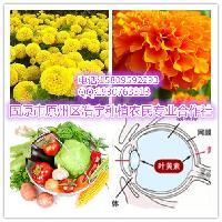 叶黄素10% 万寿菊提取物 源头工厂 优质 植物提取物