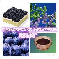 蔓越莓 蔓越橘提取物 天然花青素 厂家直销 SC备案